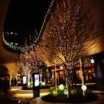 25光の階段の木